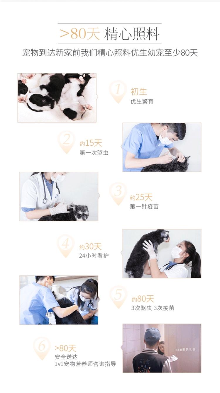 8精心照料.jpg